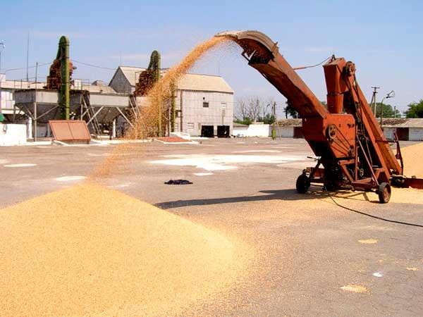 Первичная очистка зерна