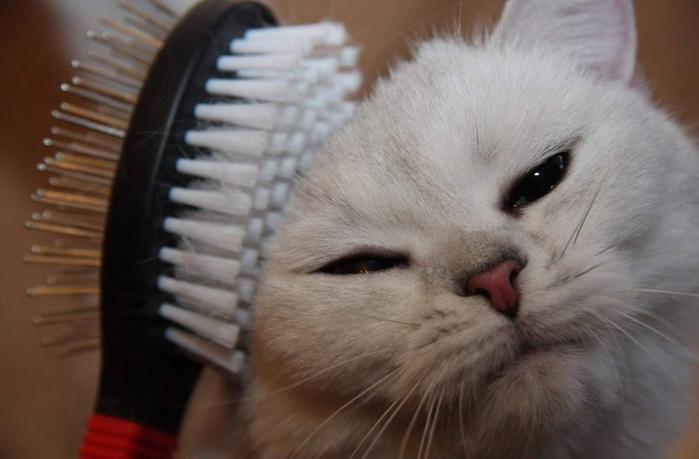 Кот линяет зимой: что делать владельцу?