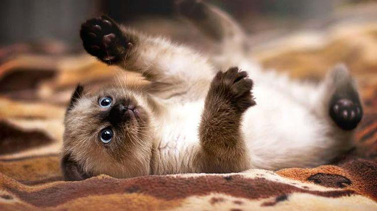 Если у кота плохая шерсть