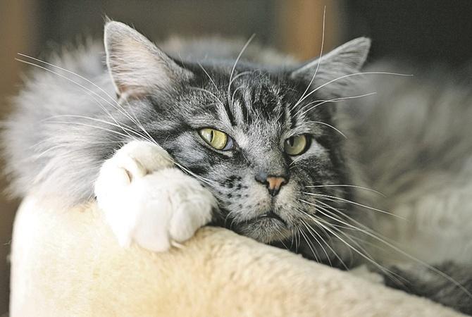 Регулярно вычесывайте кота
