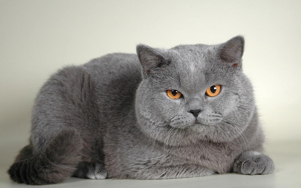 у кошки  красивая шерсть